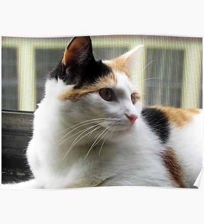 Precious Baby Kitty Face Poster