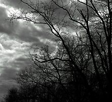 A Cloudy Day in Black and White by Nevermind the Camera Photography