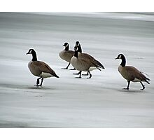 Graceful Geese Photographic Print