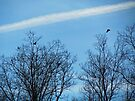 Birds In and Out of Trees by Nevermind the Camera Photography