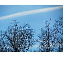 Birds In and Out of Trees Photographic Print