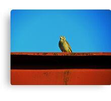 Hello, Birdie Canvas Print