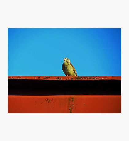 Hello, Birdie Photographic Print