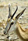 Springbok Portrait by Carole-Anne