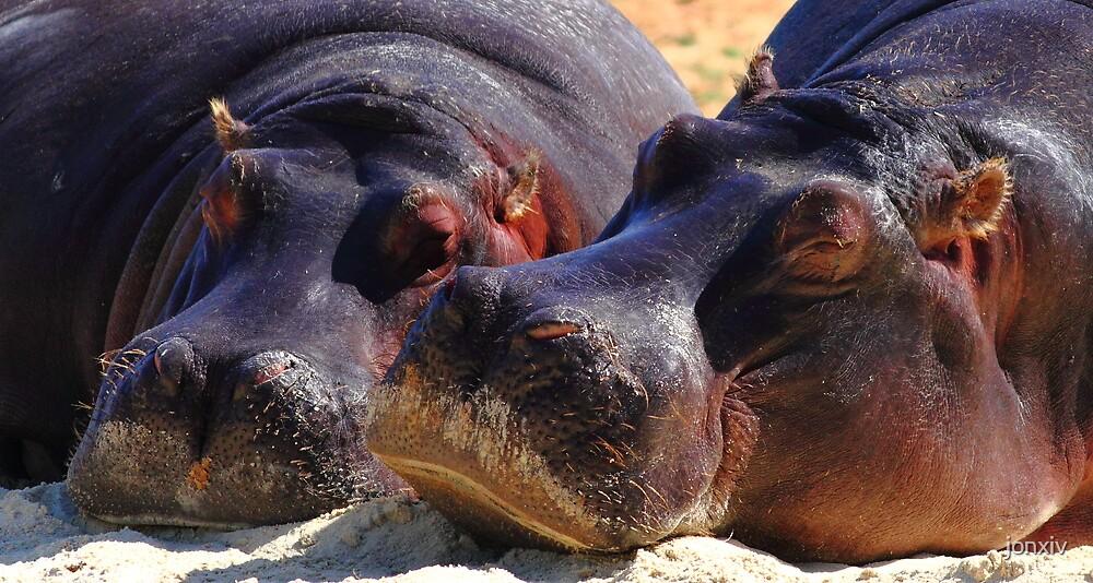 """Let Sleeping Hippos Lie"" by jonxiv"