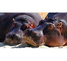 """Let Sleeping Hippos Lie"" Photographic Print"