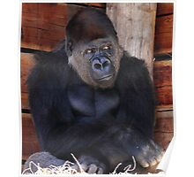 """Gorilla - What's Going on Over There?"" Poster"