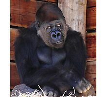 """""""Gorilla - What's Going on Over There?"""" Photographic Print"""