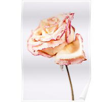 Paper Rose Poster