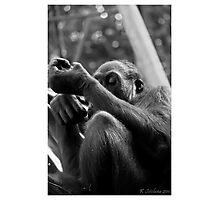 Inquisitive Photographic Print