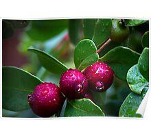 Strawberry Guava Poster