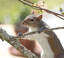 Squirrel by Brenda  Meeks