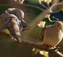 A Pair Of Mourning Doves by Bine