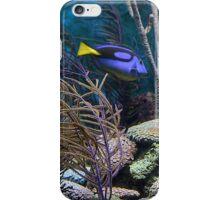 Aquatic iPhone Case/Skin
