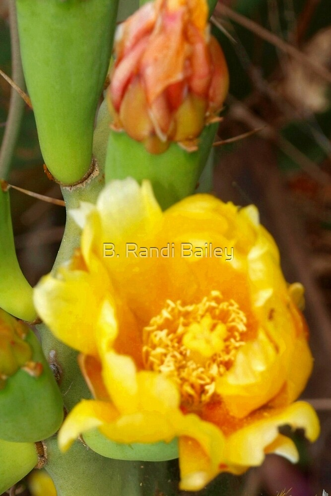 Yellow cactus flower and orange bud by ♥⊱ B. Randi Bailey