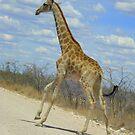 I'm on my way ...! by Irene  van Vuuren