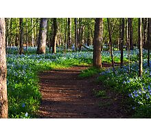A Walk in the Woods - Bull Run Regional Park, Manassas, VA Photographic Print