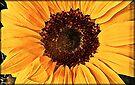 Sunflower by KatarinaD