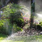 Water Paradise? - Paraíso Del Agua? by Bernhard Matejka