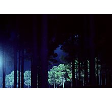 Pine Trees At Night Photographic Print