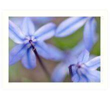 bluebells II Art Print