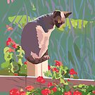 Red geraniums and cat by contourcreative