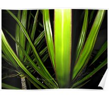 yucca in the night light Poster