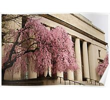 Pink Tree, Classical Columns Poster