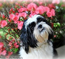My Sweetie by Donna Anglin Husband