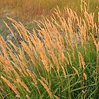 Dry Grasses by Rod J Wood