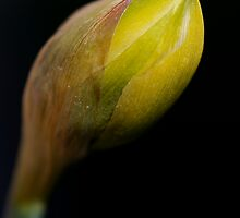 A sure sign of spring by Jim Butera