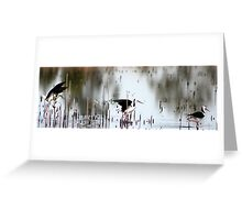 black - winged stilts  Greeting Card