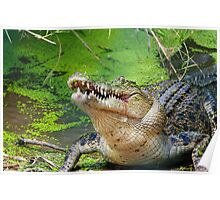 Crocodilian eating Poster