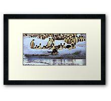 Emperor Penguins Hitting The Water Framed Print