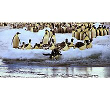Emperor Penguins Hitting The Water Photographic Print
