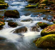Smoky Mtn Autumn Stream - 380 by ©  Paul W. Faust