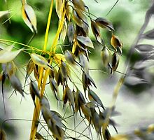 Wild Grasses by Barbara  Brown