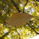 Walnut Tree Leaf by Dane Austin