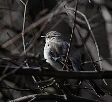 To Kill A Mockingbird by Lois  Bryan