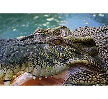 Crocodilian with open mouth Photographic Print