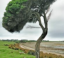 Wind Blown Tree by D-GaP
