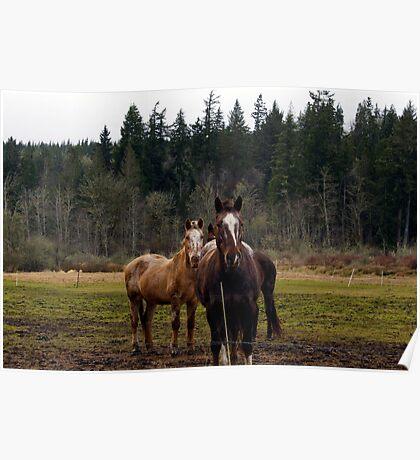 Horse-struck Poster