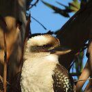 Kookaburra  by Jackson  McCarthy