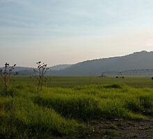 Yarra Valley   IMG_9897 by rjpmcmahon