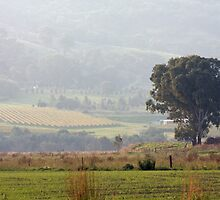 Yarra Valley    IMG_9895 by rjpmcmahon