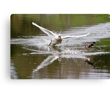 Chase.. Canvas Print