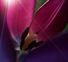 Purple sunshine by Nella Khanis