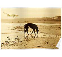 Golden Silhouette - Run Free Poster
