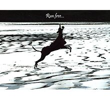 Leaping Lurcher - Run Free Photographic Print