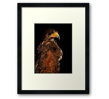 Raptor Extravaganza ~ Part One Framed Print